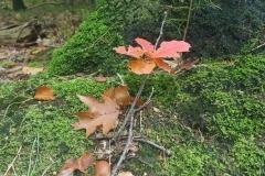 037-Sfeer-herfst-takje-bladeren
